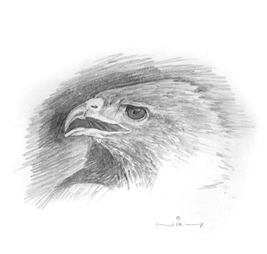 niky-eagle-drawing